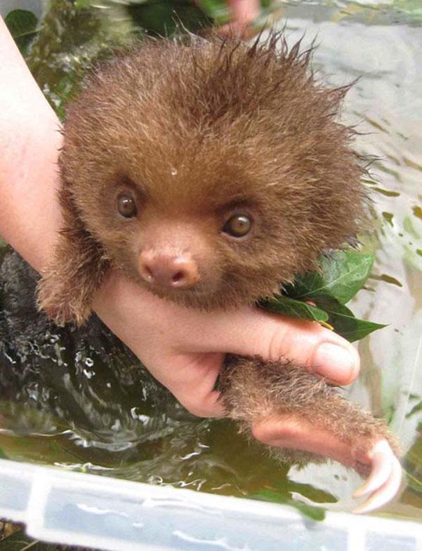 animales-les-gusta-el-baño-11