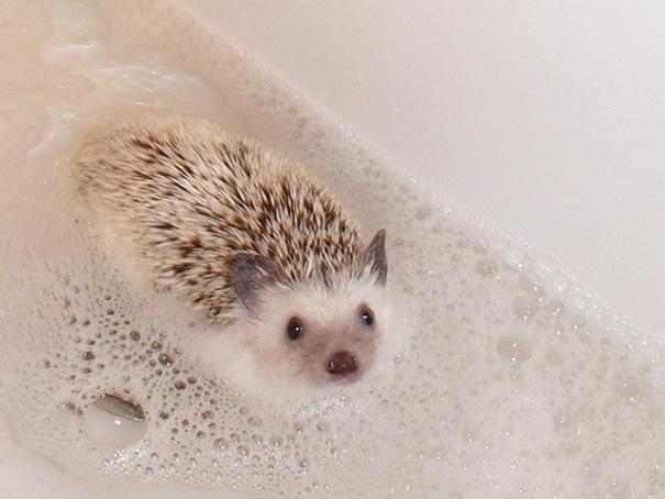 animales-les-gusta-el-baño-1