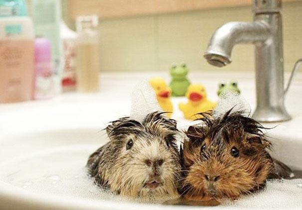animales-les-gusta-el-baño-13