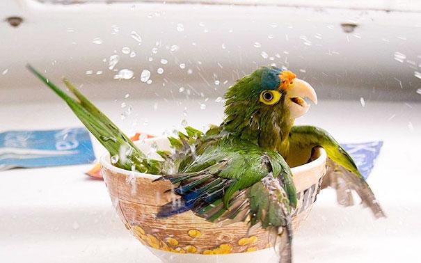animales-les-gusta-el-baño-2