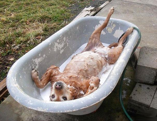 animales-les-gusta-el-baño-6
