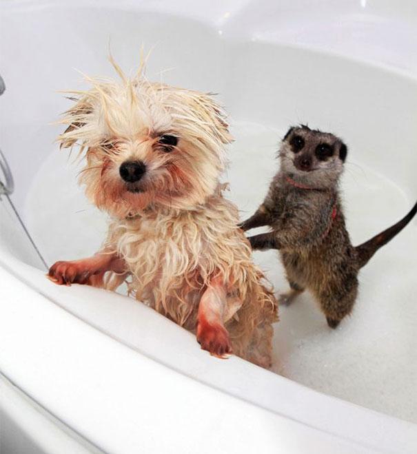 animales-les-gusta-el-baño-7
