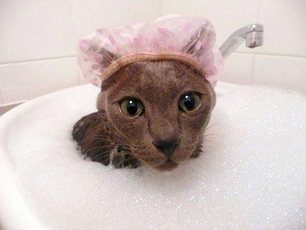 animales-les-gusta-el-baño-8