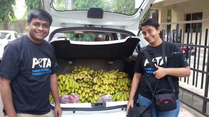 bananas-para-la-familia-del-mono-secuestrado