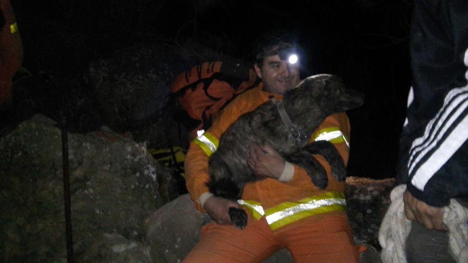perro atrapado debajo de unas piedras