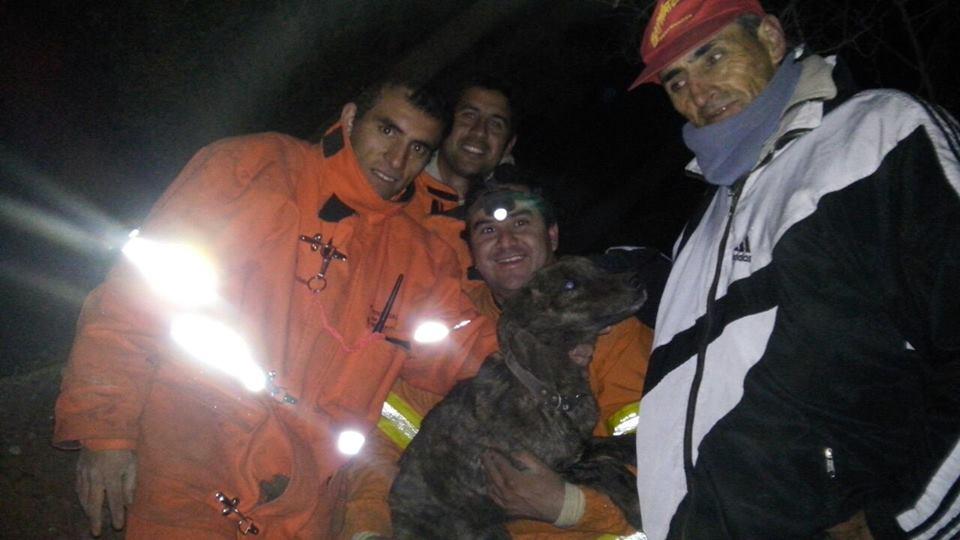 bomberos rescatan a un perro atrapado debajo de unas piedras