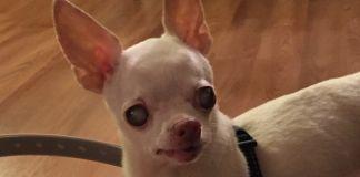 Familia de perro ciego cambia su vida con este dispositivo