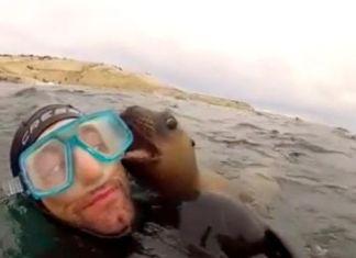 focas-amistosas-o-perritos-del-mar