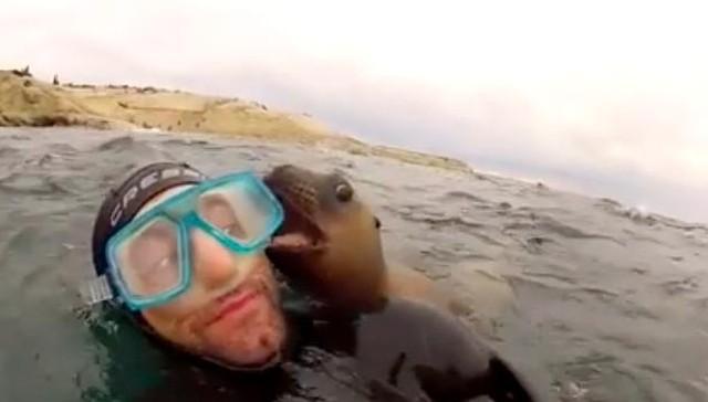 cachorros del mar