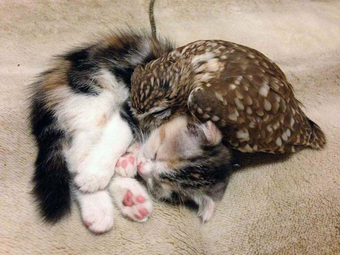 búho y gatito