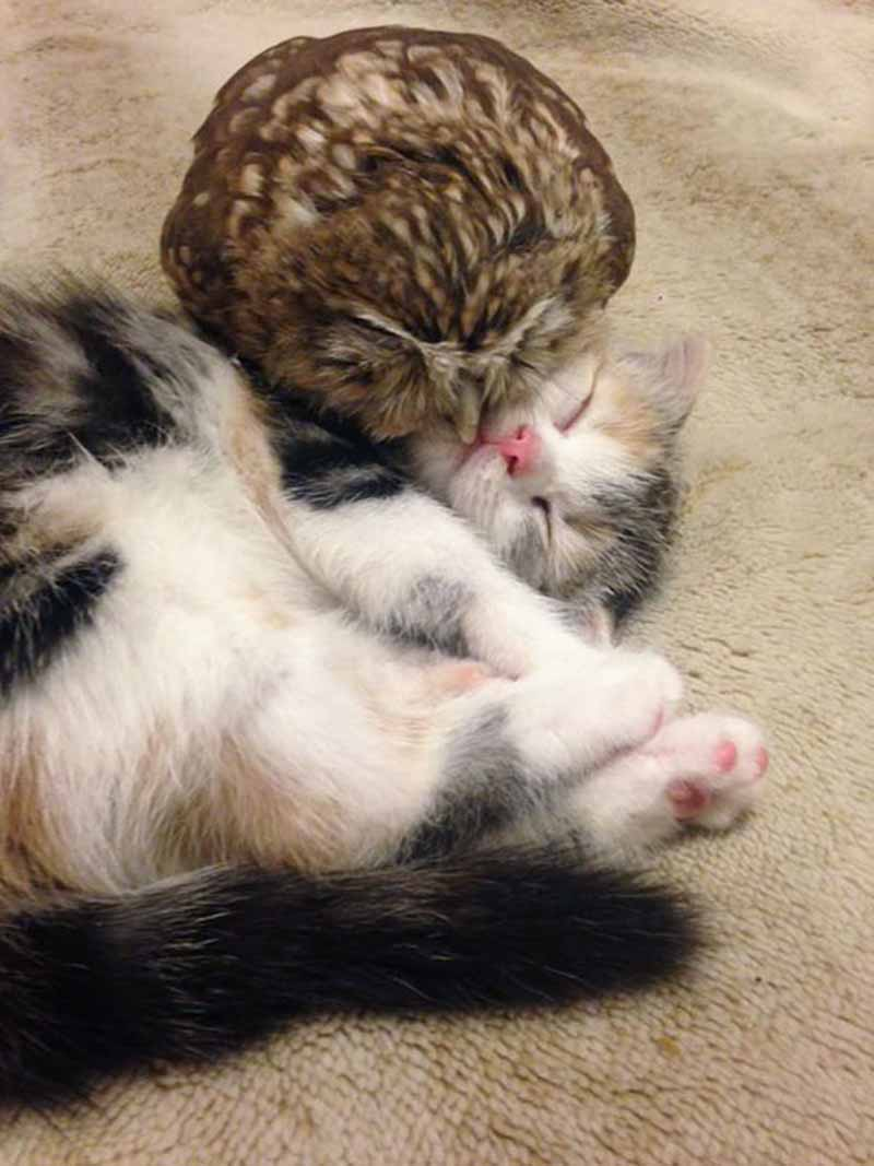 gatito-y-búho-bebés-2