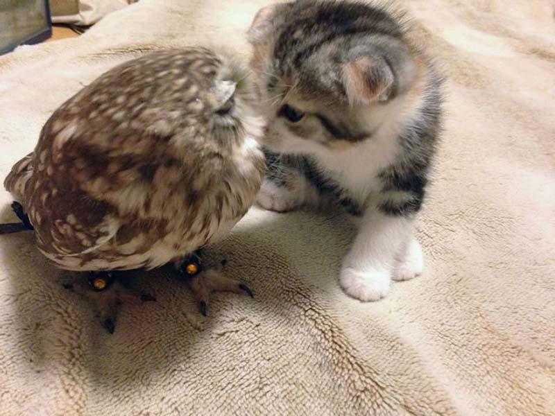 gatito-y-búho-bebés-5