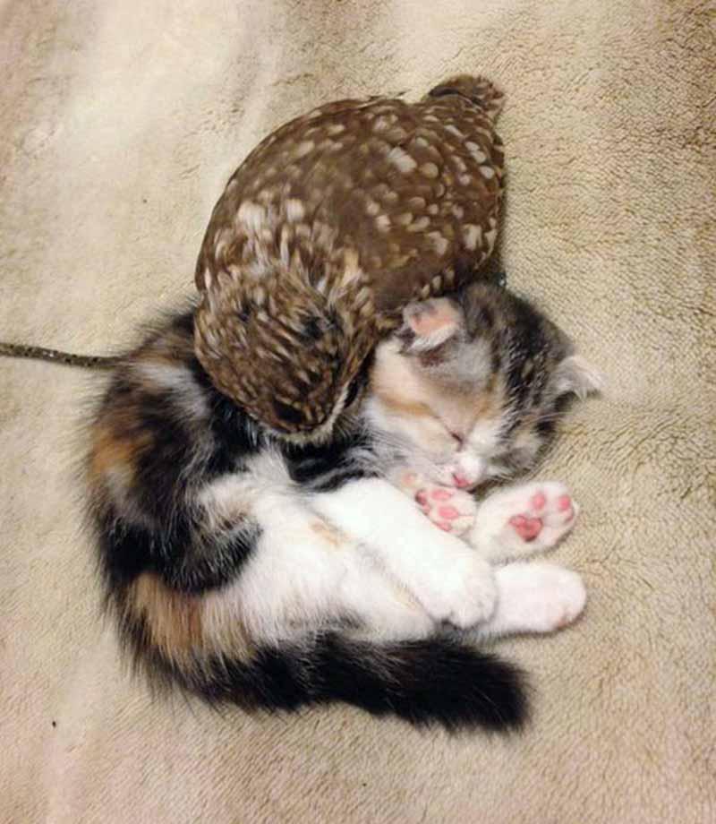 gatito-y-búho-bebés-6