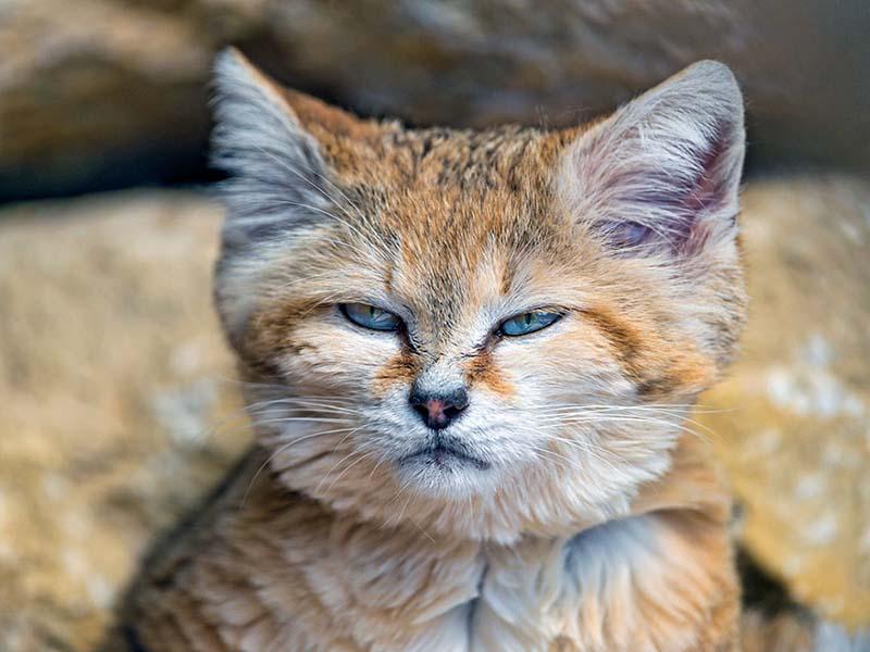 gatito de las arenas