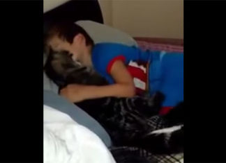 gato-extrañó-mucho-a-su-humano