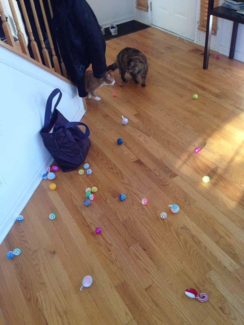 gatos-coleccionistas-1