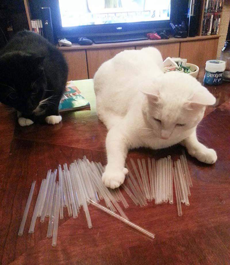 gatos-coleccionistas-10