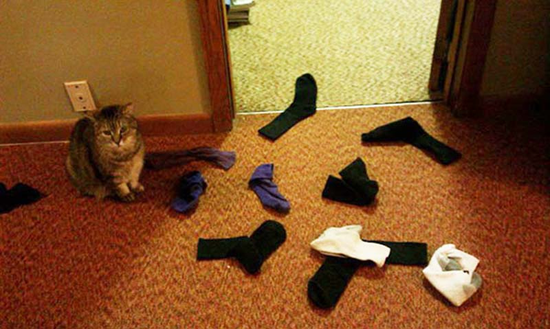 gatos-coleccionistas-11