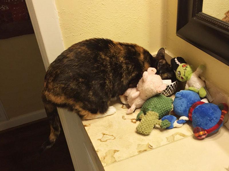 gatos-coleccionistas-12
