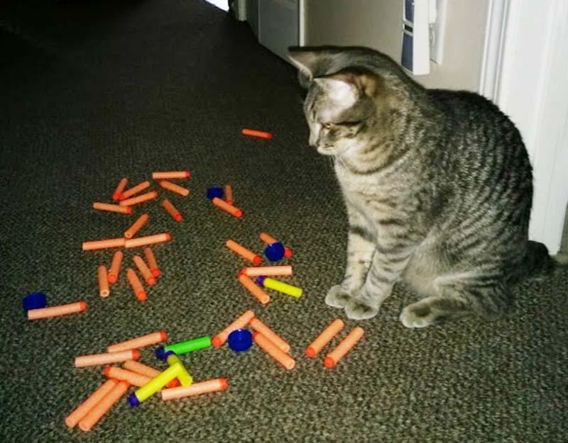 gatos-coleccionistas-13