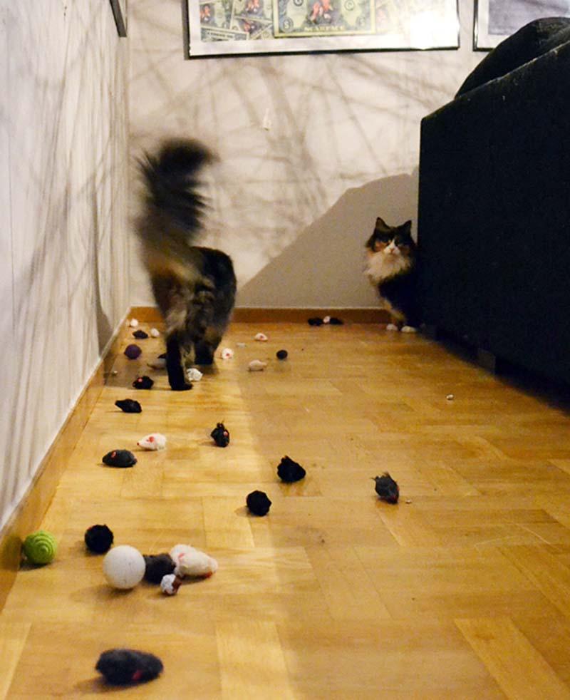 gatos-coleccionistas-14