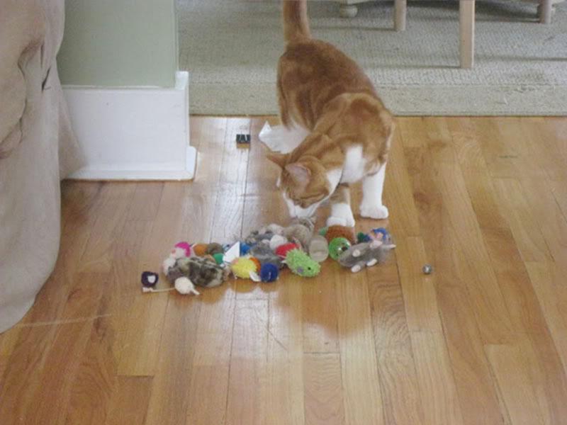 gatos-coleccionistas-15