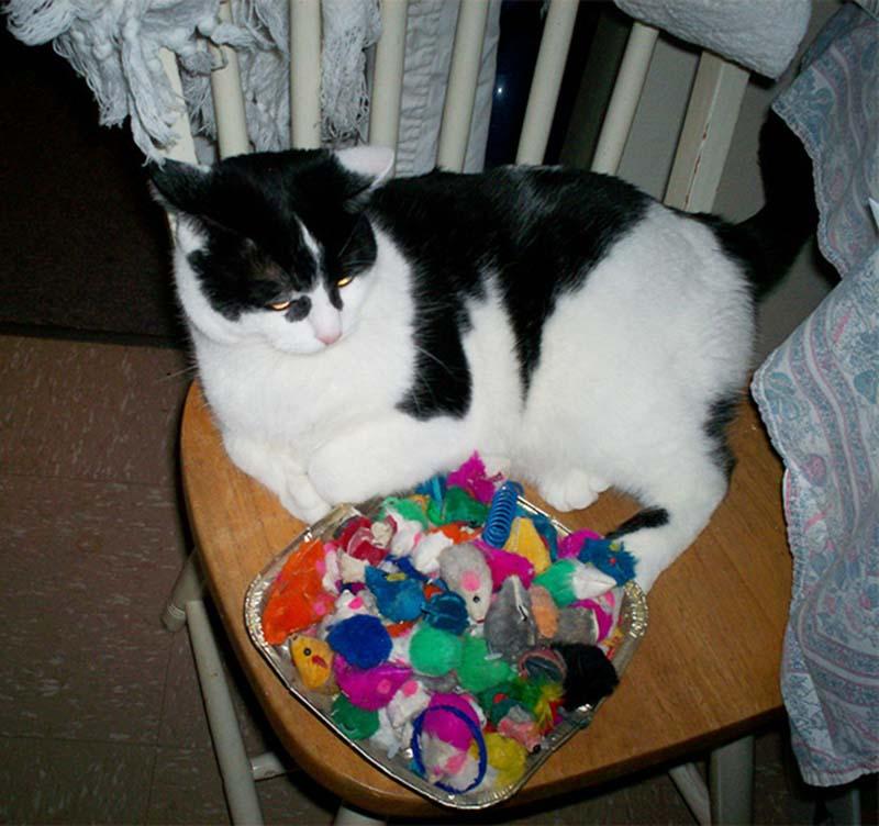 gatos-coleccionistas-16