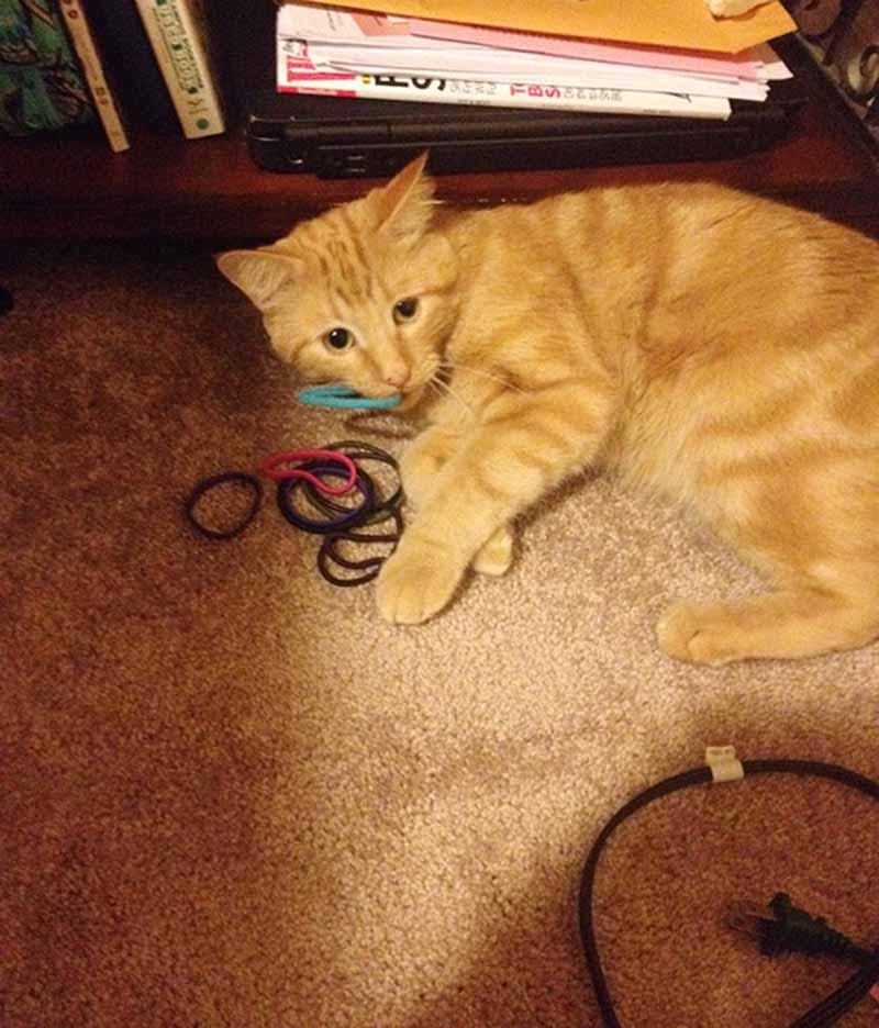 gatos-coleccionistas-17