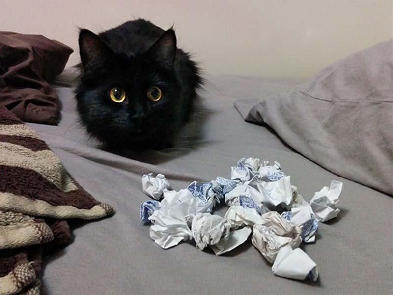 gatos-coleccionistas-18