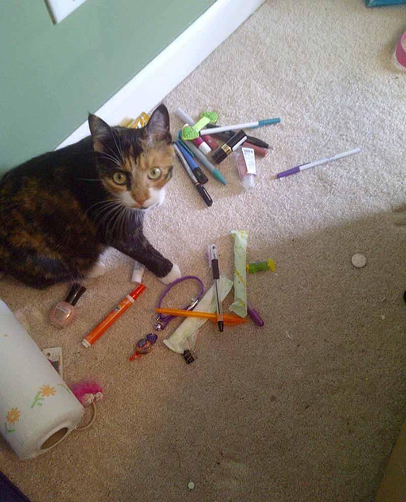 gatos-coleccionistas-3