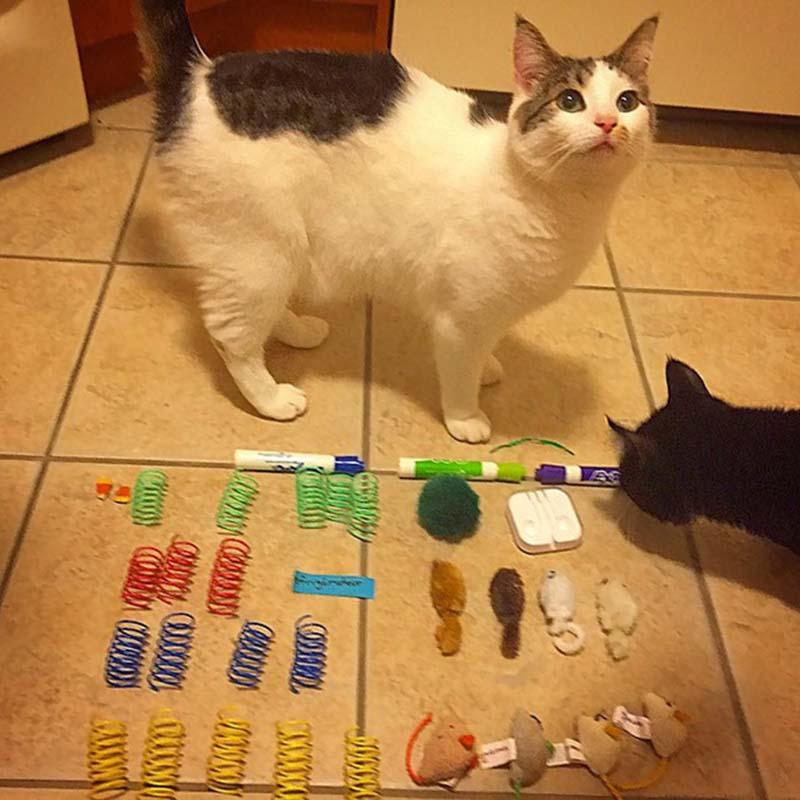 gatos-coleccionistas-4
