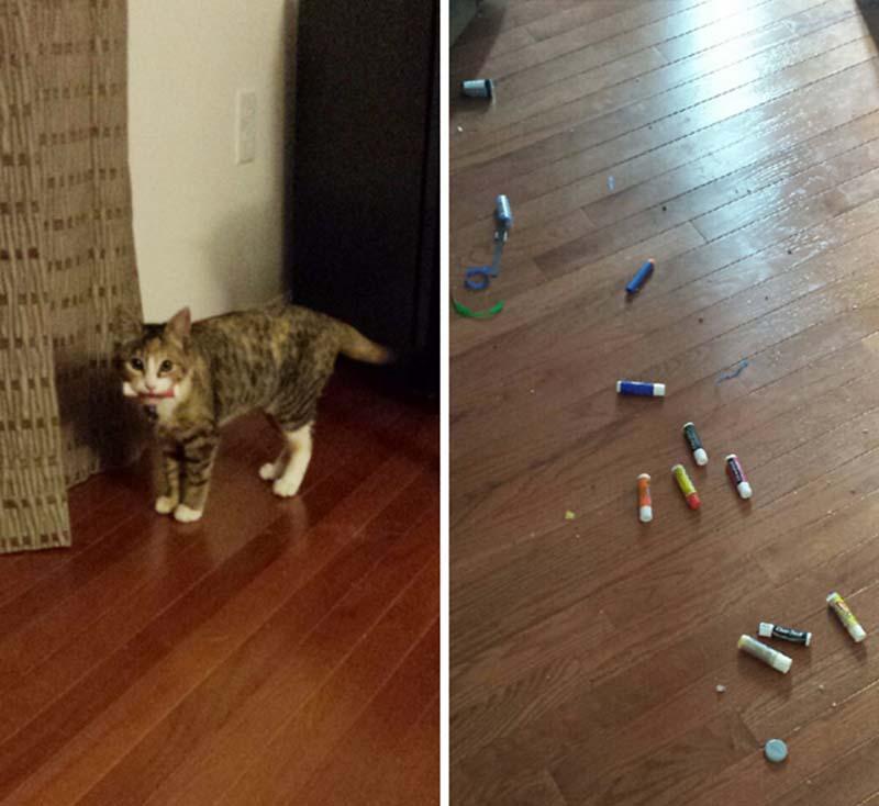 gatos-coleccionistas-5