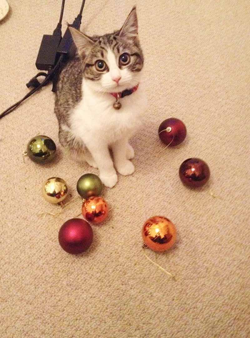 gatos-coleccionistas-7
