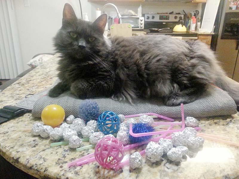 gatos-coleccionistas-8