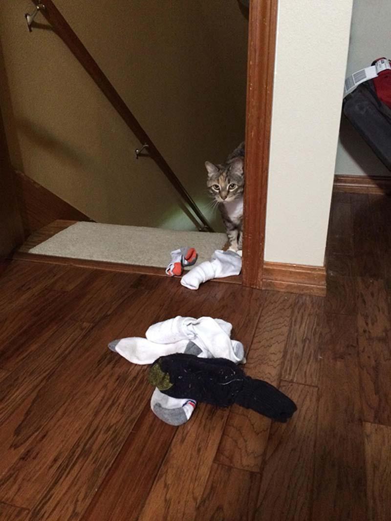 gatos-coleccionistas-9