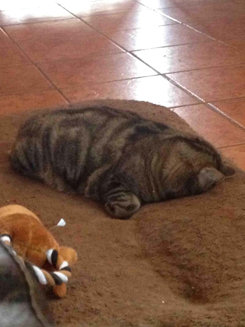 gatos-que-duermen-en-posiciones-incómodas-12