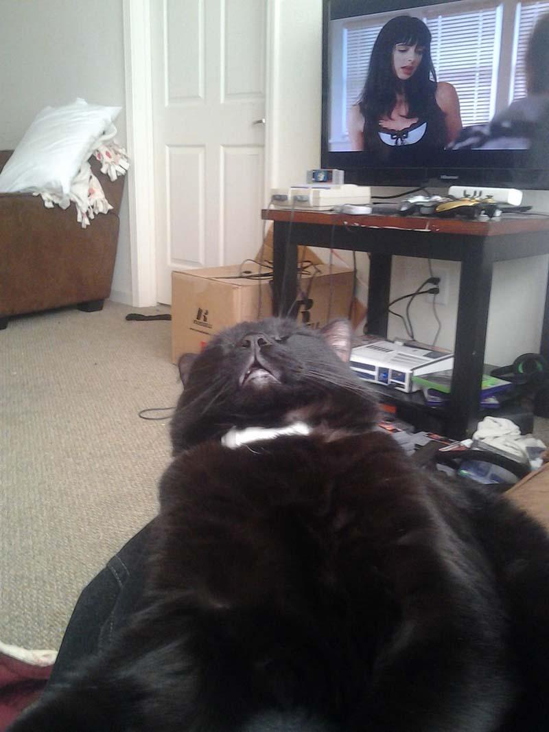 gatos-que-duermen-en-posiciones-incómodas-3