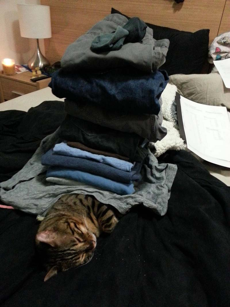 gatos-que-duermen-en-posiciones-incómodas-6