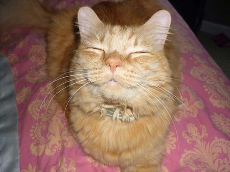 gatos-que-sonríen-1