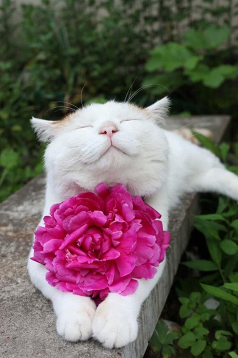 gatos-que-sonríen-10