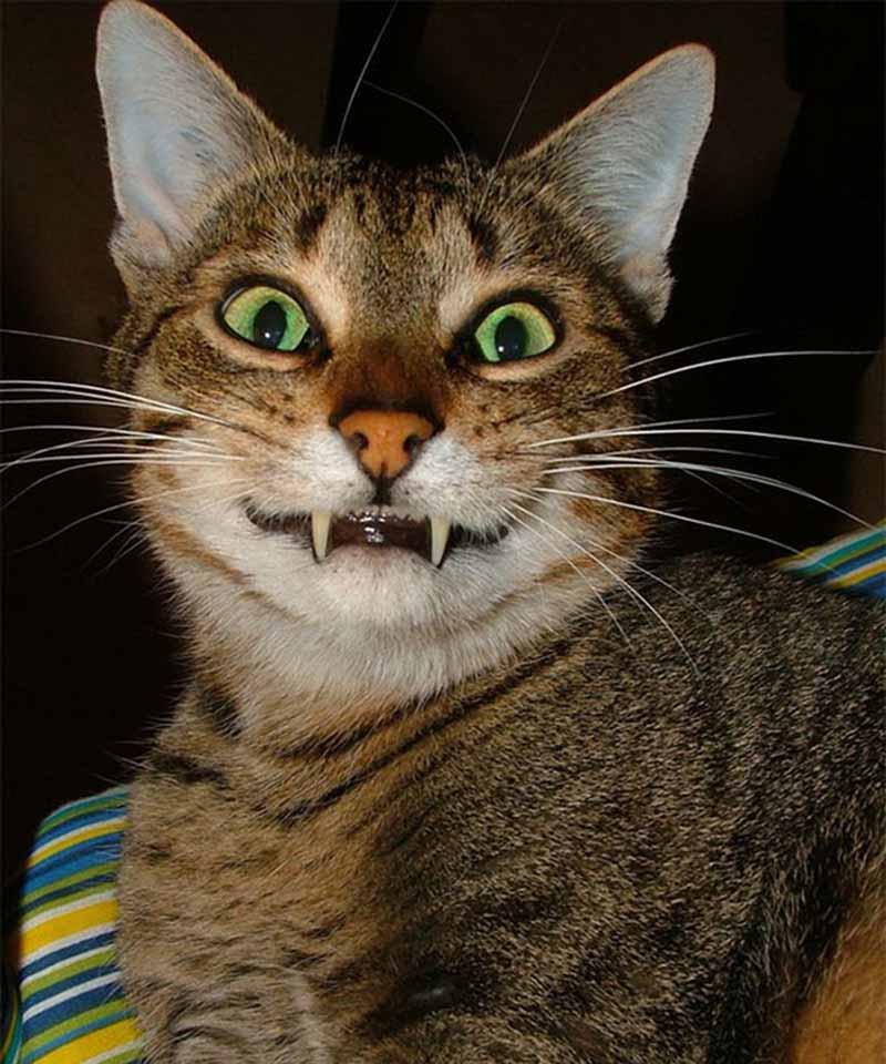 gatos-que-sonríen-11