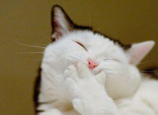 gatos que sonríen
