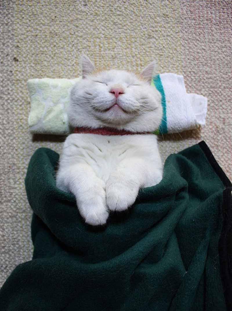 gatos-que-sonríen-13