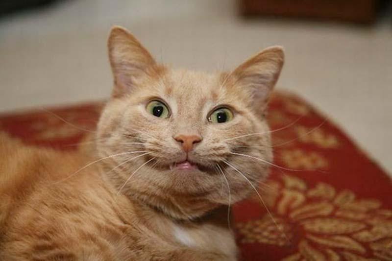 gatos-que-sonríen-14