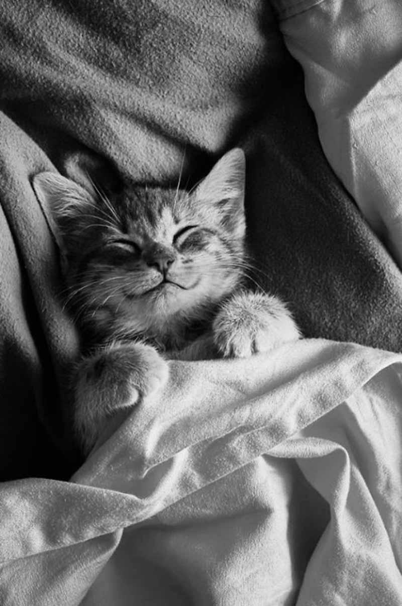 gatos-que-sonríen-6