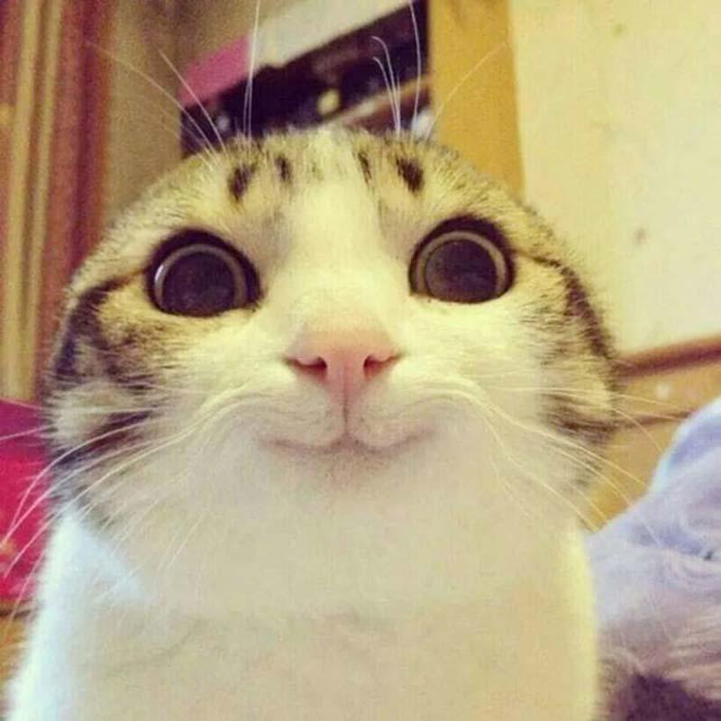 gatos-que-sonríen-9