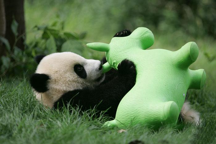 Panda y su juguete en la guardería