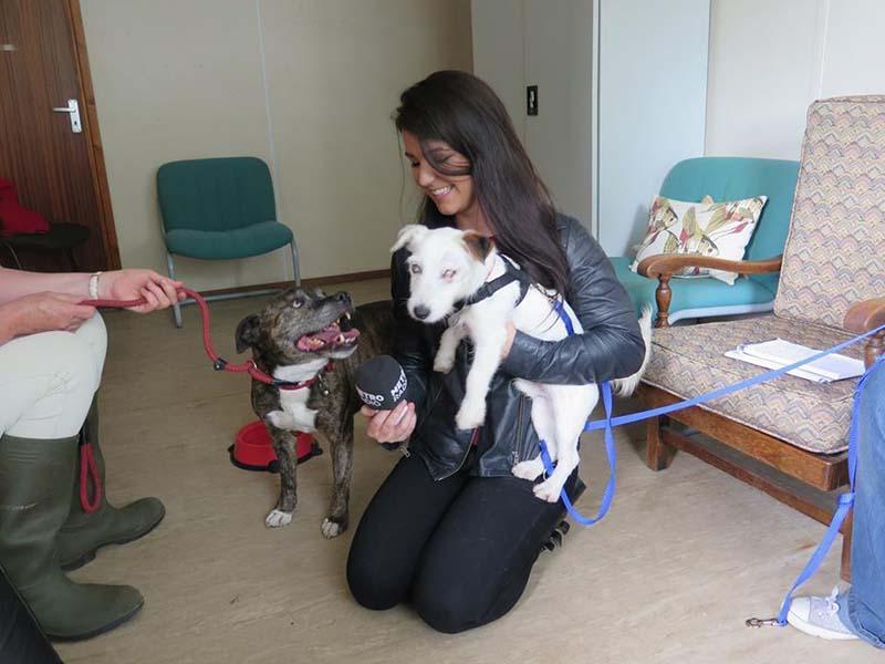 los-perros-son-felices-con-su-nueva-familia