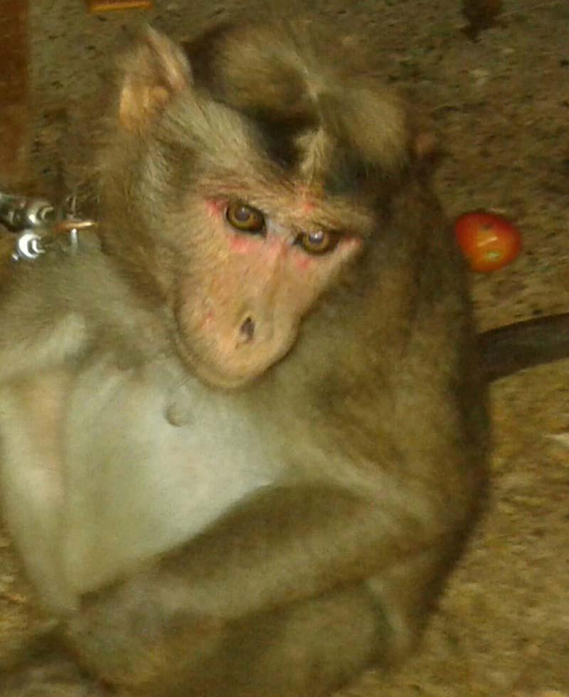 mono-secuestrado-fue-rescatado