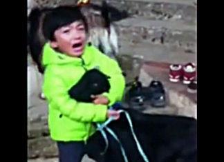 niño no permite que sacrifiquen a su cabra